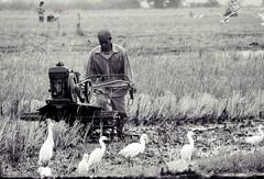 Farmer with Hand Tractor (Kyel21) Tags: field farm philippines farmer handtractor kyel21