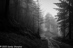Pine Forest (Sandy Sharples) Tags: uk winter england blackandwhite bw mist nature monochrome rain fog pine forest canon mono woods path derbyshire february peaks