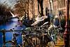 Amsterdam - Gull (Lucky Like Lucy) Tags: holland amsterdam canon nederland thenetherlands streetshots streetphotography meeuw meeuwen urbanphotography egelantiersgracht streetportraits amsterdamcanals straatfotografie streetsofamsterdam peopleofamsterdam stadsarchiefamsterdam canalsofamsterdam iwanlindeboom amsterdamstreetshots stadsfotografie straatportretten stadfotografie amsterdamsestraatportretten stadsarchievenamsterdam
