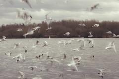 Sometimes you gotta slow down (mattd85) Tags: longexposure nature wildlife gull gulls