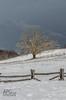 Waiting for Spring (APGougePhotography) Tags: park detail price nc nikon north clarity northcarolina parkway boone blueridgeparkway blueridge topaz d600 denoise topazlabs nikond600 topazdenoise topazdetail topazclarity