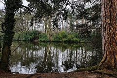 Hartsholme Country Park (lincoln_eye) Tags: uk greatbritain trees winter england lake water reflections march europe cloudy unitedkingdom eu overcast lincolnshire foliage bark lincoln gb ripples trunks bushes 2015 hartsholmecountrypark
