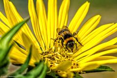 DSC03140.jpg (J.Weyerhuser) Tags: botanischergarten colorefex nik procontrast