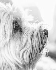 Cuca (Adisla) Tags: sony nex 7 zuiko pen f 40mm f14 mf manual perro bn