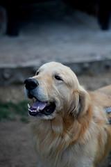 DOG (WacsiM) Tags: pasto nario colombia colombie voyage vacances holidays trip discover dcouverte dcouvre photo wacsim canon eos 550d 50mm flou blur bokeh