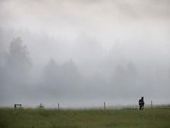 Horse in mist_03 (Barbro_Uppsala) Tags: sweden vstmanland kllbcken mist fog foggy evening horse summer fotosondag fotosndag fs160828 sommarnoje sommarnje