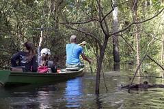 _TEF6524 (Edson Grandisoli. Natureza e mais...) Tags: rio barco antena colar pintada ona rdio pesquisa amaznia solimes vrzea monitoramento regionorte pesquisador rdiocolar