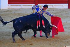 El Fandi, Feria de la Hogueras (Fotomondeo) Tags: elfandi davidfandila matador toro toros torodeosborne corridadetoros bull bullfight bullfighter bullring torero alicante alacant espaa spain hoguerasdesanjuan fogueres