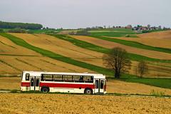 Jelcz L120 (Konrad Krajewski) Tags: jelcz l120 wiosna z jelczem