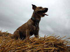 Happy girlie (Zandgaby) Tags: dog cute yellow ball funny straw canine tired playful k9