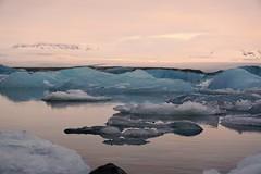 more iceberg lagoon at Jokulsarlon, Southern Iceland (PsJeremy) Tags: icebergs iceland jorkulsarlon austerskaftafellssysla floatingice lagoon surreal