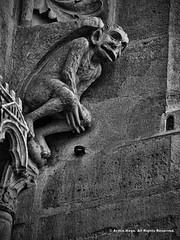 Grotesque Gargoyle (Armin Hage) Tags: notredamedeparis chimera paris france frenchgothic cathedral romancatholic devil demon hell gargoyle grotesque carving arminhage