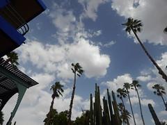 Marrakech - Jardin Majorelle (dbohaty) Tags: jardin majorelle morocco almaghrib