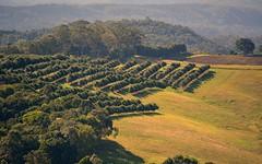 macadamia plantation (dustaway) Tags: modanville northernrivers nsw australia plantation macadamianutplantation hillsides distance dunoon landscape crops australianlandscape rurallandscape ruralaustralia