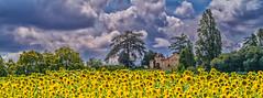 Dordogne (TM Photography Vision) Tags: dordogne france frankreich bordeaux aquitaine sony a850 minolta schweiz basel riehen perigord gironde st meard de gurcon landscape natur sonnenblumen