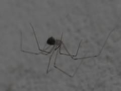DSC05445 (familiapratta) Tags: sony dschx100v hx100v iso100 natureza inseto insetos nature insect insects