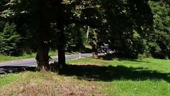 Wartburg Rallye (RyanWeyrauch) Tags: wartburg rallye hohe sonne wald eisenach adac porsche citroen