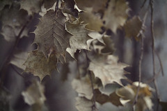Never FALL Down (Ayeshadows) Tags: quote autumn dry leaves browns dead life rainy cloudy evening valley travel diaries