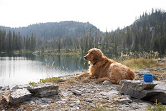 Lion and the cup (s_jenkV2) Tags: mission mountains mountain range montana swan seeley valley approach piper basin lakes ducharne summer season 2016 backpack trip hiking explore adventure forest nature wild wilderness huckleberry bush camp camping fire campfire canon 70d