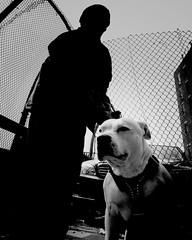 "11:40 AM ""Lucci"" (ShelSerkin) Tags: shotoniphone hipstamatic iphone iphoneography squareformat mobilephotography streetphotography candid portrait street blackandwhite nyc newyork newyorkcity gothamist"