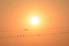 Fine agosto () Tags: sole sun uccelli birds filo wire mimimalism luce light