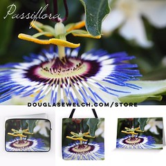 Get these Passiflora products exclusively from http://ift.tt/1hfrEWq #flowers #passiflora #garden #products #clothing #home #technology #arts #crafts #plants (dewelch) Tags: ifttt instagram get these passiflora products exclusively from douglasewelchcomstore flowers garden clothing home technology arts crafts plants