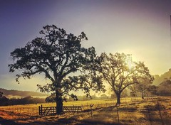 California Countryside (Starrgalla) Tags: shadows morning norcal fences gate hills field sunrise trees tree branches oaktrees oak country countryside california
