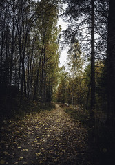 Autumn walk- Sliders Sunday (anek07) Tags: hss sliderssunday sweden autumn fall leavs autumnleaves october sunbeam sun forrest path birches