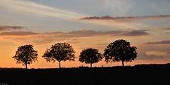 Four Trees at Dusk (Mystycat =^..^=) Tags: arbres soir coucherdesoleil sunset ciel nuages poitoucharentes charente france silhouettes