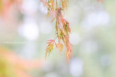 Beauty in Nature (littlekiss) Tags: leaves nature bokeh simple sunshine vandusenbotanicalgarden vancouver littlekissphotography