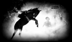 Rafael Cardoso (Eduardo Amorim) Tags: gacho gachos gaucho gauchos cavalos caballos horses chevaux cavalli pferde caballo horse cheval cavallo pferd crioulo criollo crioulos criollos cavalocrioulo cavaloscrioulos caballocriollo caballoscriollos pampa campanha fronteira uruguaiana riograndedosul brsil brasil sudamrica sdamerika suramrica amricadosul southamerica amriquedusud americameridionale amricadelsur americadelsud cavalo         hst hest hevonen  brazil eduardoamorim jineteada gineteada