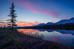 Sunset Near Cantwell, Alaska (Mike Beauchamp) Tags: alaska cantwell sunset reflection reflections sprucetree spruce lake water mountains denalinationalpark denali