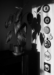 black and white.. (lubokl47) Tags: plant miniature watch czech