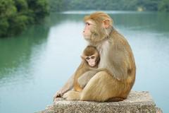 DSC01576_2 (Chris wwh) Tags:  reservoir hk  hongkong monkey