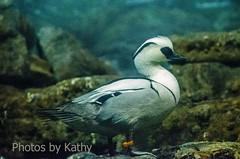 DSC_2230 ts (Photos by Kathy) Tags: cincinnatizoo animals zoo zoos nature kathymoore nikon2000 bird