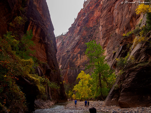 """Virgin river narrows • <a style=""""font-size:0.8em;"""" href=""""http://www.flickr.com/photos/59465790@N04/15528466369/"""" target=""""_blank"""">View on Flickr</a>"""