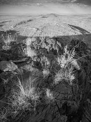 boolcoomatta sept 2014 - 9291364 - wiperaminga (liam.jon_d) Tags: blackandwhite bw monochrome grass landscape mono desert australian conservation australia outback sa southaustralia bha semiarid cymbopogon southaustralian billdoyle bushheritageaustralia westernloop conservationreserve abhf boolcoomatta cymbopogonambiguus bushheritage outbacklandscape scentedgrass australianbushheritagefund boolcoomattareserve wiperaminga wiperamingahill eremophilaloop