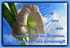 Sei getrost und unverzagt 1 / Be strong and courageous 1 (Martin Volpert) Tags: flower fleur christ god blossom faith flor blossoms pflanze blumen lord amaryllis bible blomma christianity blume bibbia fiore blüte herr blomst scripture virág scriptures lore biblia bloem gott blóm çiçek floro kwiat flos holyspirit ciuri bijbel kvet kukka cvijet flouer glauben christentum bibleverses bláth jesuschristus heiligergeist cvet zieds õis ritterstern floare blome žiedas bibelverskarte mavo43 lovetruth