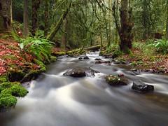 Upstream (Walking Uno Photos) Tags: longexposure autumn forest river britishcolumbia victoria vancouverisland current victoriabc beautifulbc todinlet flickrunitedaward