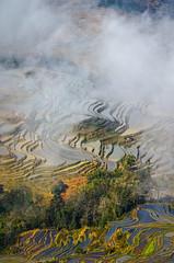 Yuanyang County  Bada Terraced Field (2) () Tags: china daylight yunnan    flickrhongkong yuanyangcounty   flickrhkma badaterracedfield