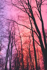 Heaven (Benjamin Geoffroy) Tags: road wood trip pink autumn trees wild black france tree love nature colors forest canon vintage heaven peace purple colorfull magic hipster dream hippy lifestyle oldschool adventure explore benjamin psyche geoffroy