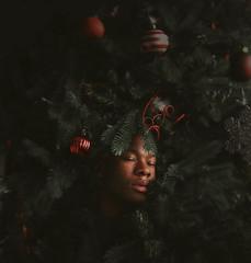 Christmas Tree (torrancehall) Tags: