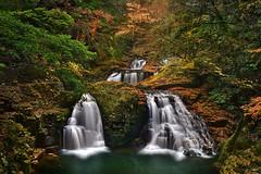 Sounds of Autumn (JKboy Jatenipat :: I am a little traveler) Tags: autumn japan landscape waterfall mie 48 akame ninai