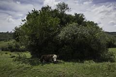 Villa Serrana Ultra Trail | 141213-0021587-jikatu (jikatu) Tags: field uruguay run trail campo gr 162 ricoh carrera lavalleja villaserrana jikatu vsultratrail