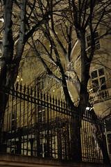 Trees of Paris in winter - 3 (jmvnoos in Paris) Tags: trees winter light paris france tree night gold golden nikon lumire or hiver arbres nuit arbre dor dore d700 jmvnoos