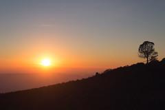 Loner [Tree #3] (zh3nya) Tags: california sunset orange sun tree silhouette northerncalifornia contrast outdoors haze glare hiking kitlens flare bayarea lone eastbay norcal mtdiablo solitary goldenhour mountdiablo mountdiablostatepark 1855mmf3556 d3100