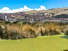 Lake Titicaca1743-2 (kasiahalka (Kasia Halka)) Tags: lake peru uros laketiticaca southamerica totora island puno quechua floatingislands preincan titiqaqa artificialislands floatingreeds