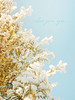 and dream (mintukka) Tags: winter light snow tree nature soft pastel branches dreamy snowybranches