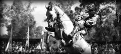Patria gaucha (Eduardo Amorim) Tags: horses horse southamerica criollo caballo cheval caballos cavalos pferde cavalli cavallo gauchos pferd chevaux gaucho  amricadosul uruguai gacho amriquedusud  gachos  sudamrica suramrica amricadelsur sdamerika crioulo caballoscriollos criollos jineteada  americadelsud gineteada tacuaremb crioulos cavalocrioulo americameridionale caballocriollo campeiros campeiro eduardoamorim cavaloscrioulos