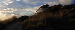 Arai te Uru 4 (Markj9035) Tags: sunset sea newzealand lake ferry coast lakes windswept coastline northland ahipara northlands oponomi